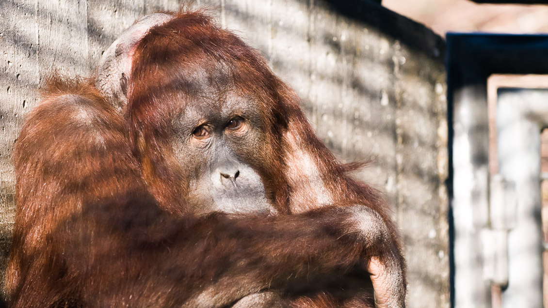 Zoo Hannover Affen