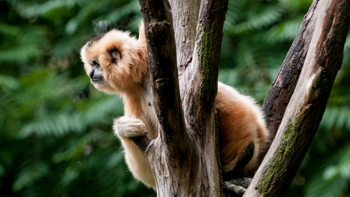 Hannover Zoo Affen