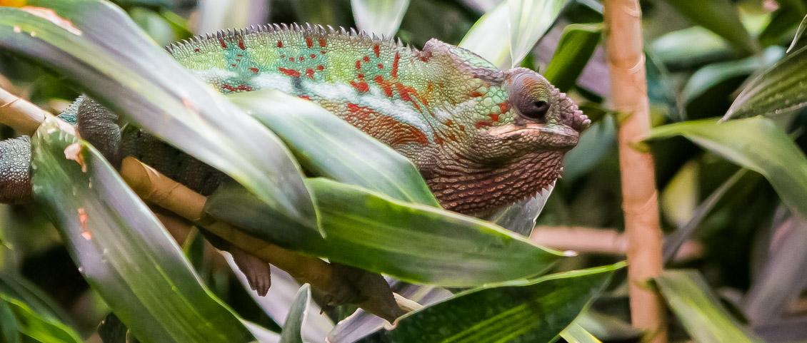 Tierpark Hagenbeck Aquarium Chameleon