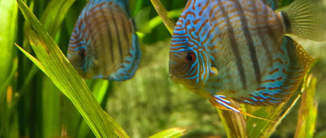 Tierpark Hagenbeck Aquarium
