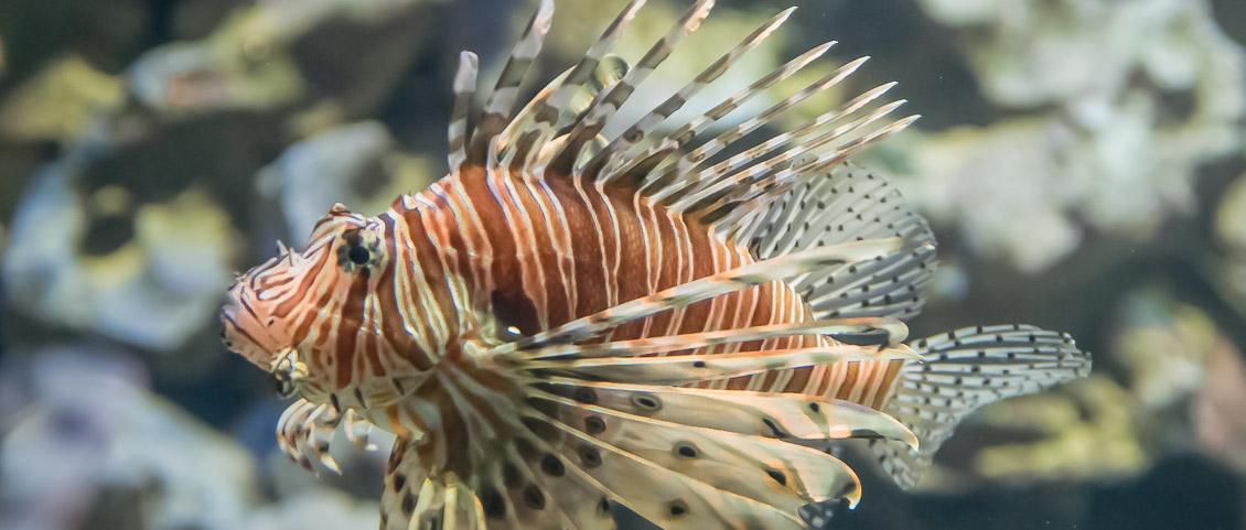 Tierpark Hagenbeck Aquarium Rotfeuerfisch