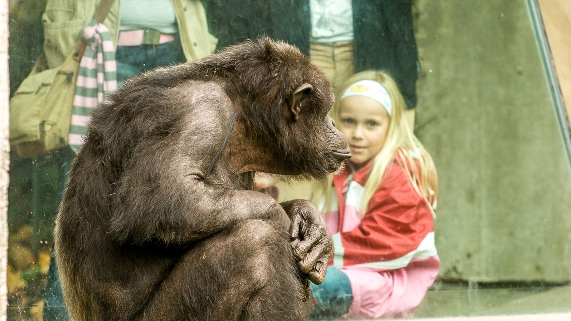 Affengehege im Erlebniszoo Hannover