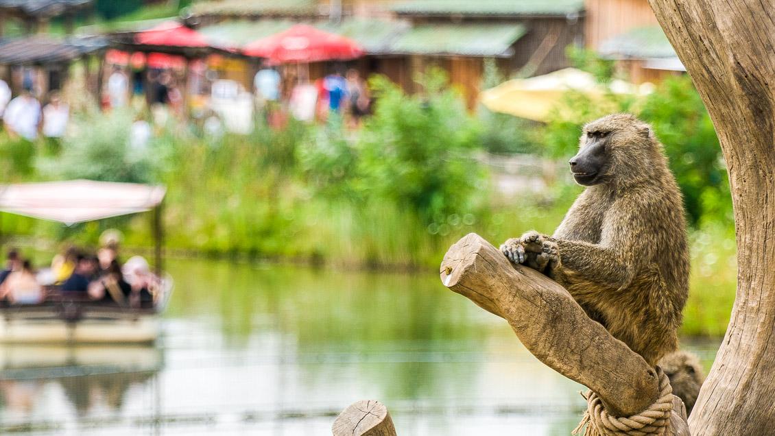 Zoom Erlebniswelt Zoo Gelsenkirchen