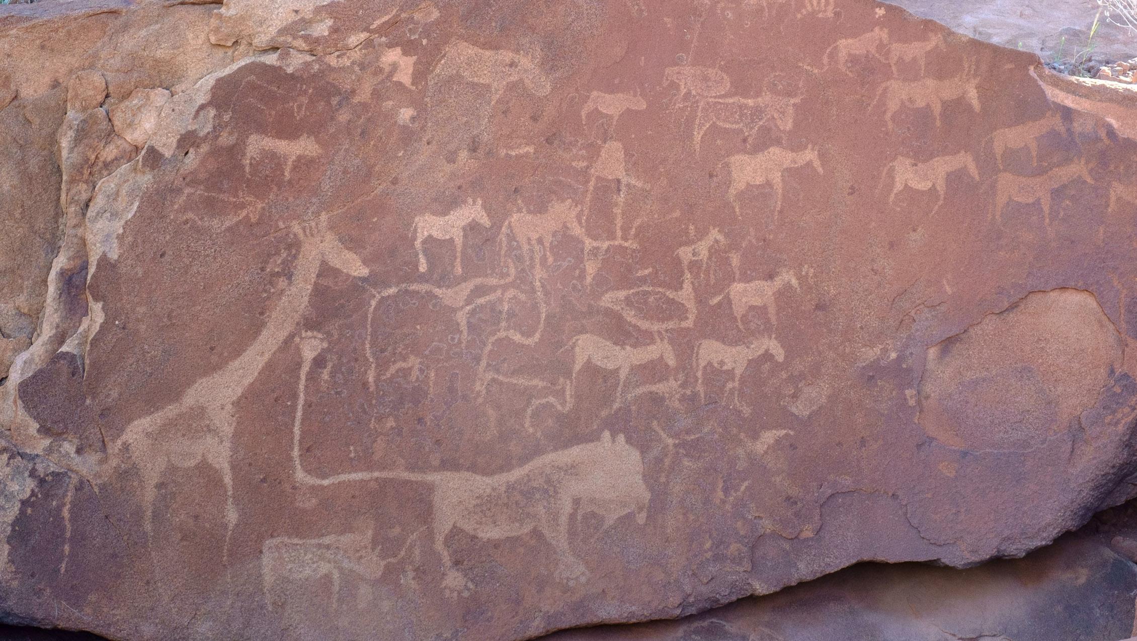 Namibia Tweyfelfontain Lion