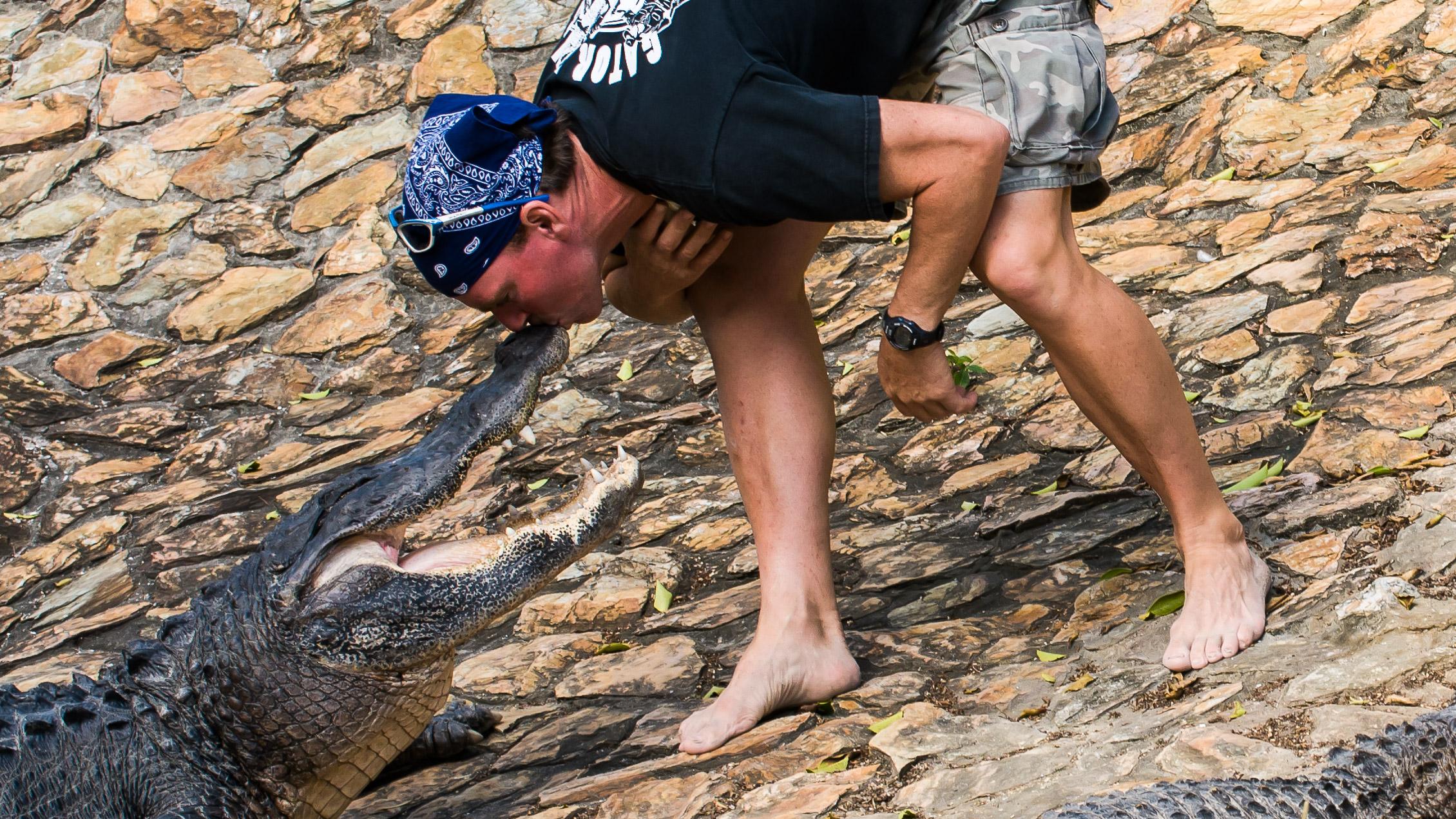 Everglades Florida Alligator Wrestler