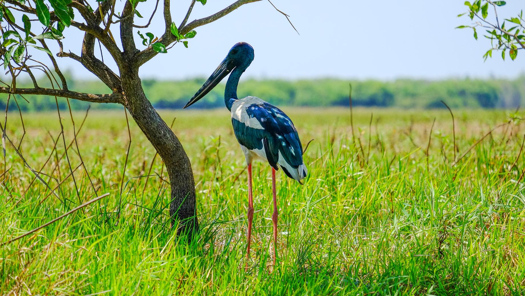Dieser ruhige Vertreter wiederum gehört laut Guide zu den eher seltenen Arten.
